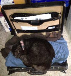 Cat sleeping in my briefcase